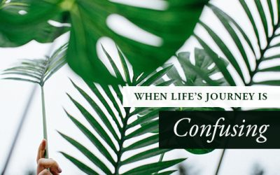 Word for Palm Sunday: When Life's Journey is Confusing